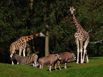 Woodland Park Zoo - Oct 2010